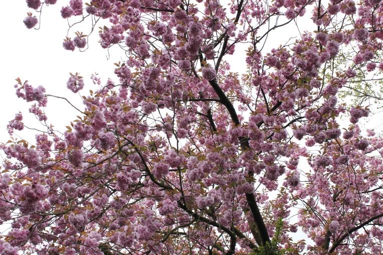 Foto 29-04-16 11 11 38